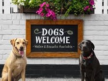 Dog Friendly pubs in the Solent