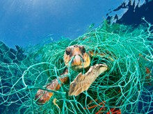 Sailors should report all fishing gear entanglements